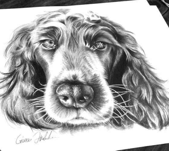 Dog pencil drawing by Gina Friderici