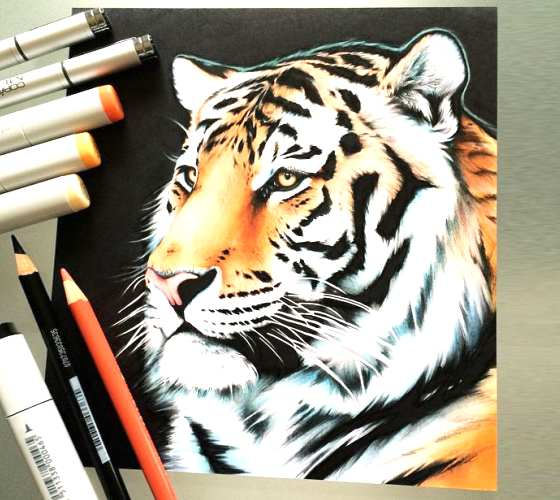 Tiger drawing by Stephen Ward